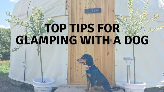 Glamping with a dog