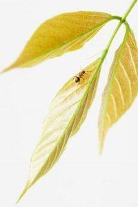 Bug Off: Natural Glamping Hacks to Repel Bugs