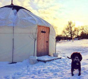 Yurt and dog