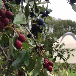 Autumn berries glamping